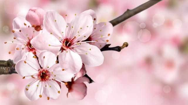 весна_цвітіння_дерева_квіти