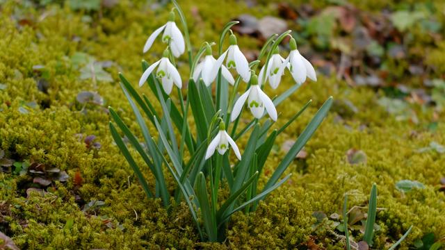 весна квіти