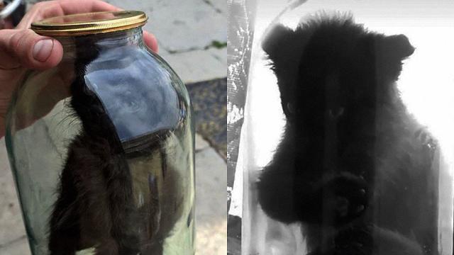 У Червонограді хлопець закрив кошеня в трилітровій банці - ФОТО