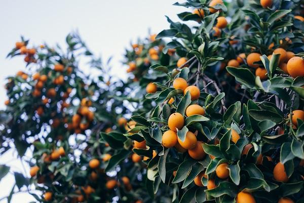 5 тропічних фруктів, які варто вживати частіше