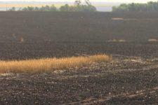 Палив стерню, а знищив сусідський врожай: на Дніпропетровщині фермер втратив 43 га пшениці