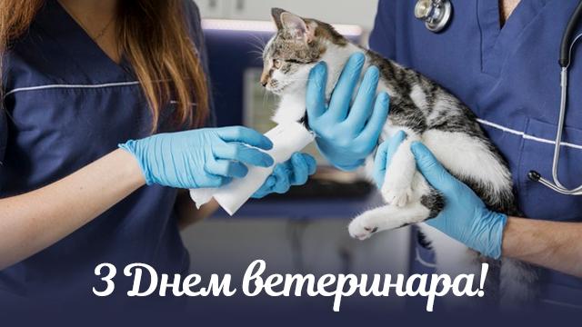 День ветеринара 2020: привітання в листівках   Факти ICTV