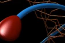 350 років помилкових досліджень: вчені дізналися, як рухаються сперматозоїди