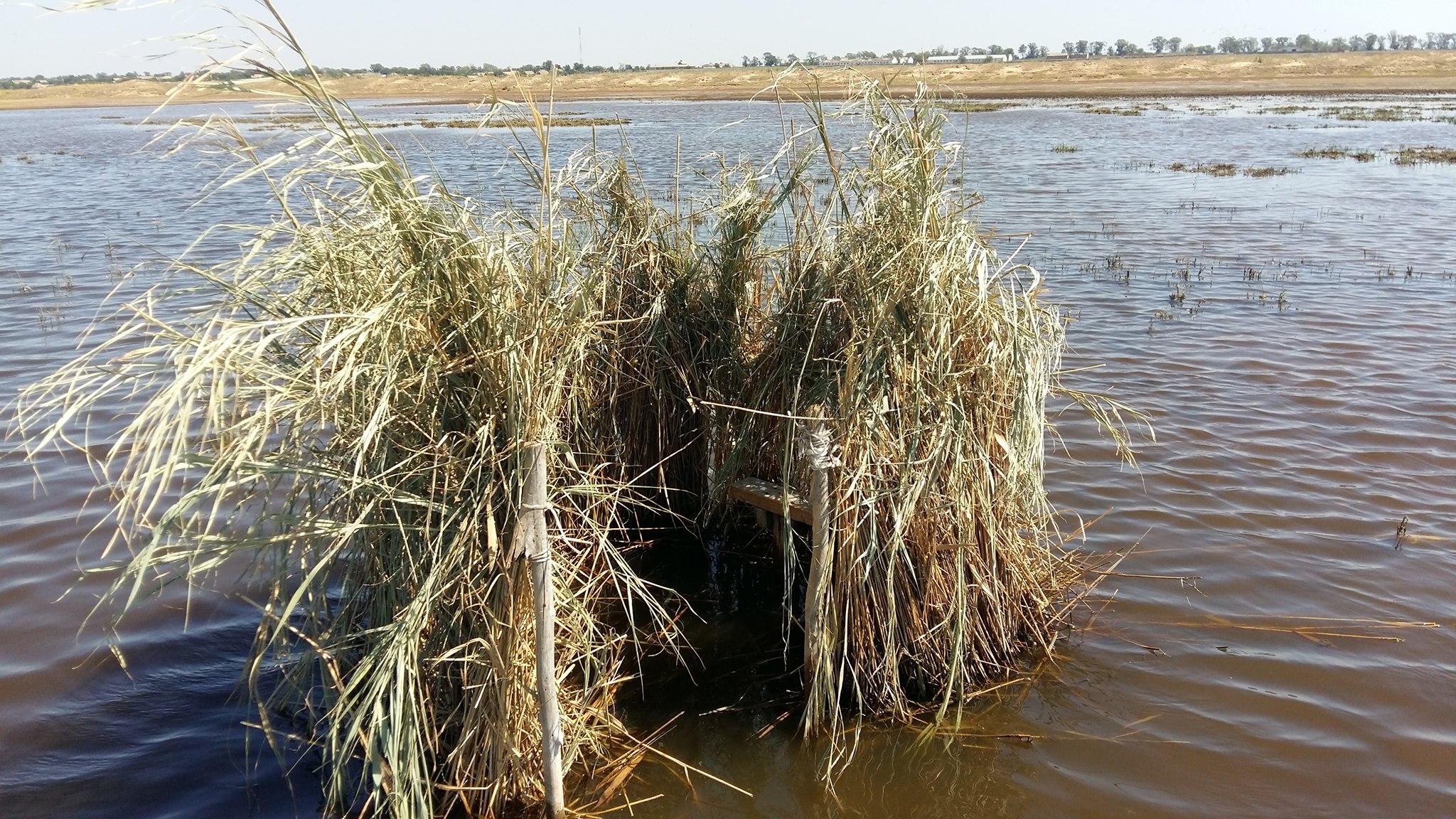 На Одещині потужний град вбив сотні диких птахів на Тузловських лиманах
