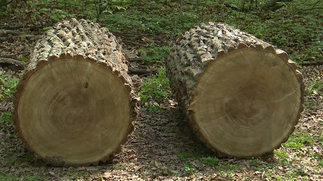 незаконна вирубка лісів