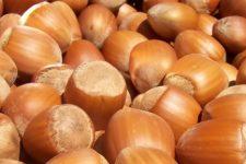 Украинская лещина: где выращивают, цена и польза ореха