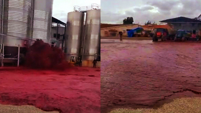 В Іспанії випадково розлили 50 000 літрів червоного вина