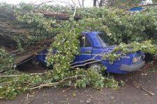Ураган під Херсоном повалив майже 50 дерев і зірвав дах школи