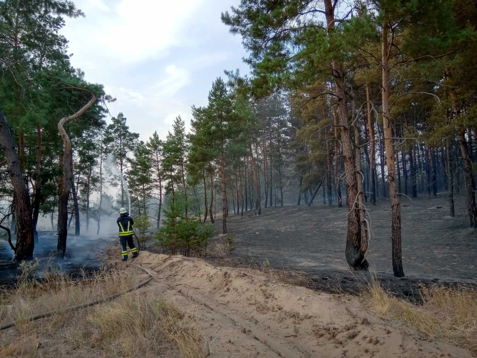 За вихідні на Донбасі зафіксували дві великих лісові пожежі