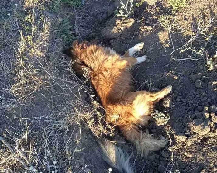 вбивство тварин