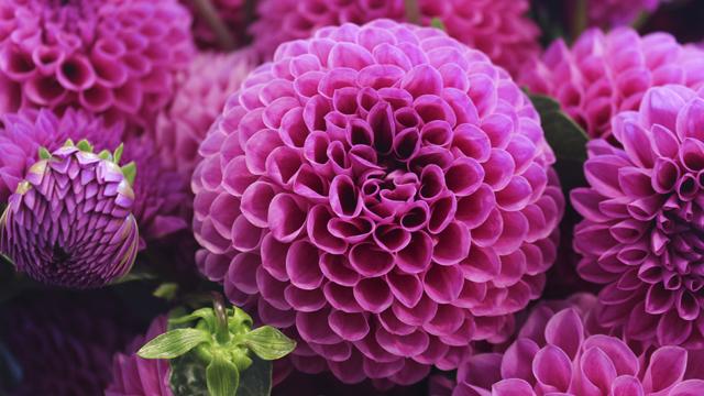 Квіти на День вчителя 2020: що подарувати