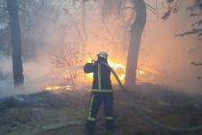 ДБР взялося за чиновників ДСНС у справі про пожежі на Луганщині
