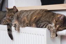 Жара в квартирах и новые тарифы: почему отопление в Украине дорожает