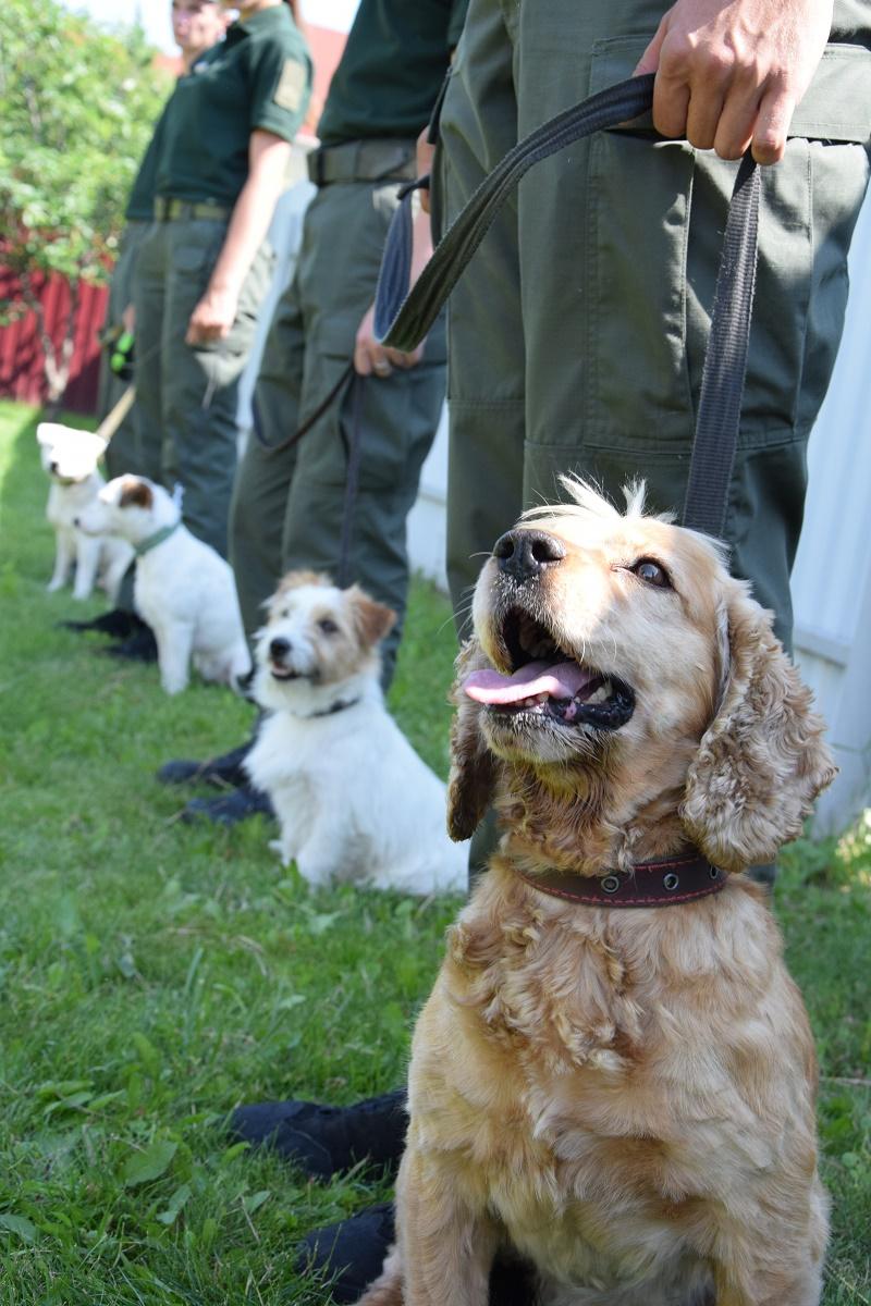 Затримали понад 400 порушників і знайшли 100 кг наркотиків: як собаки допомагають прикордонникам