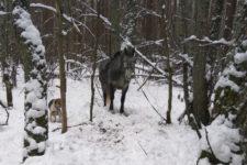 Полювали верхи на коні: на Чернігівщині затримали банду браконьєрів