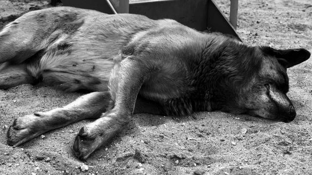 Розчленовував собак та їв: на Житомирщині шкуродера відпустили під домашній арешт