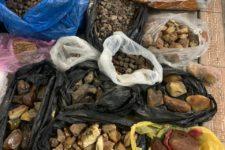 На Житомирщині СБУ викрила нелегальний збут бурштину