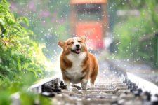 Как помочь животным в жару: 7 советов по уходу