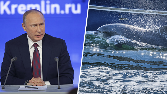 Путин Дельфин