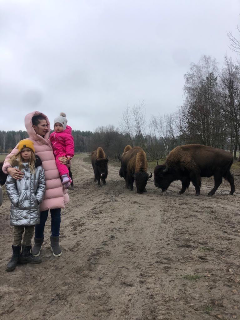Напад бізонів на родину в еко-парку на Київщині: недбалість чи ігнорування правил