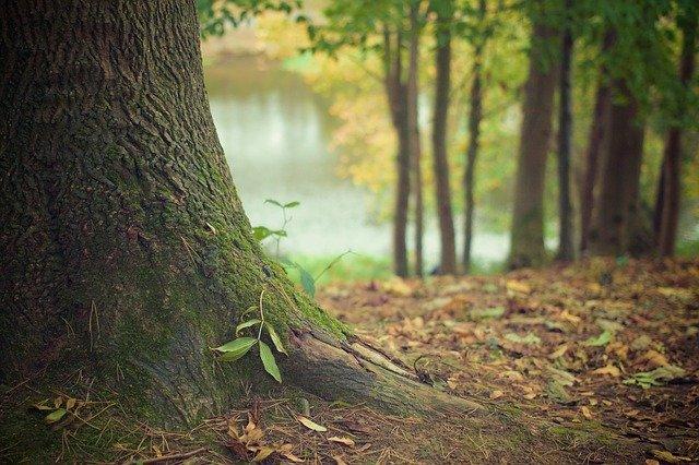 На Житомирщині чиновник покривав вирубку лісів