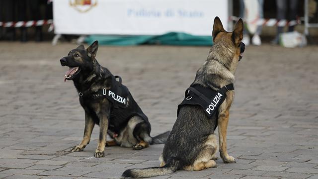 Полицейские собаки в Италии