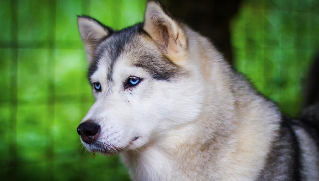 В Одеській області жінка застрелила собаку, а фото кинула у чат села