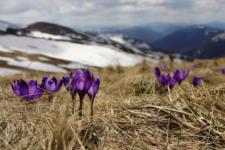 Вітер в голові та сніг за вікном: реакція мережі на перший день весни
