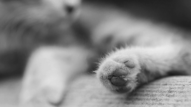 Перебив усі лапки: в Києві чоловік познущався над безпритульним котом