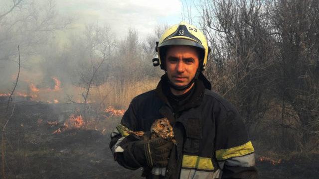 Випалювання сухої трави: на Дніпропетровщині врятували совеня від загибелі
