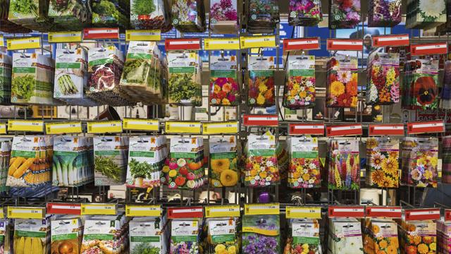 насіння городина