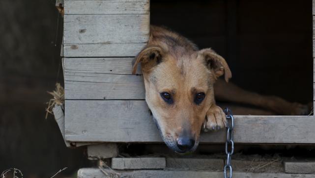 На Вінничині невідомі гамселили собак молотками, тварини померли