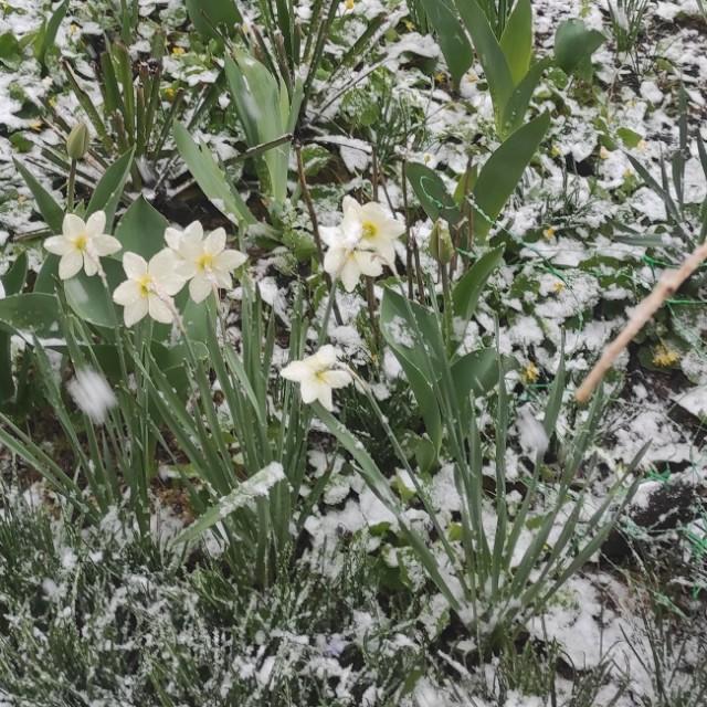 Сніг 26 квітня