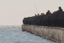 Пішла до російських берегів. Чому в Азовському морі зникає риба