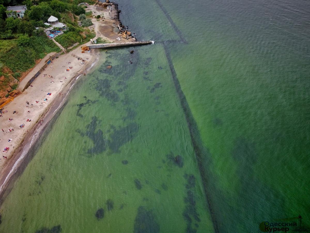 Причина в дощі та ціанобактеріях: в Одесі зацвіло море