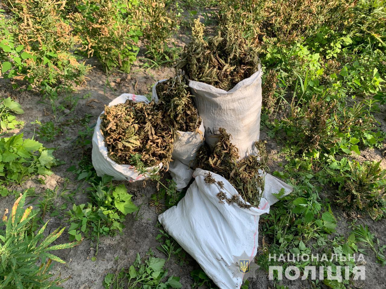 На Херсонщині злочинці вирощували величезну плантацію конопель ФОТО, ВІДЕО