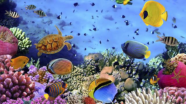 кораловый риф египет