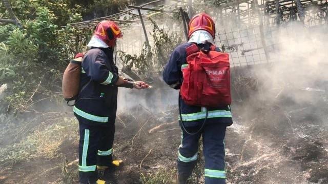 Українські рятувальники ліквідують лісові пожежі в Греці
