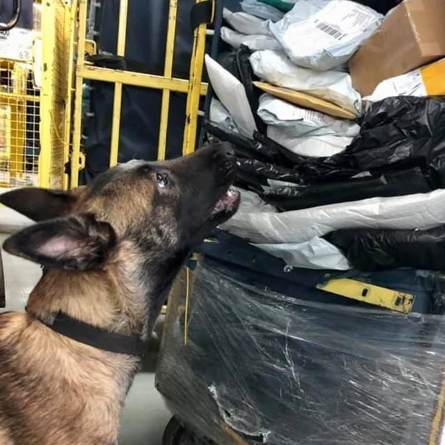 Службовий пес Київської митниці знайшов наркотики в посилці