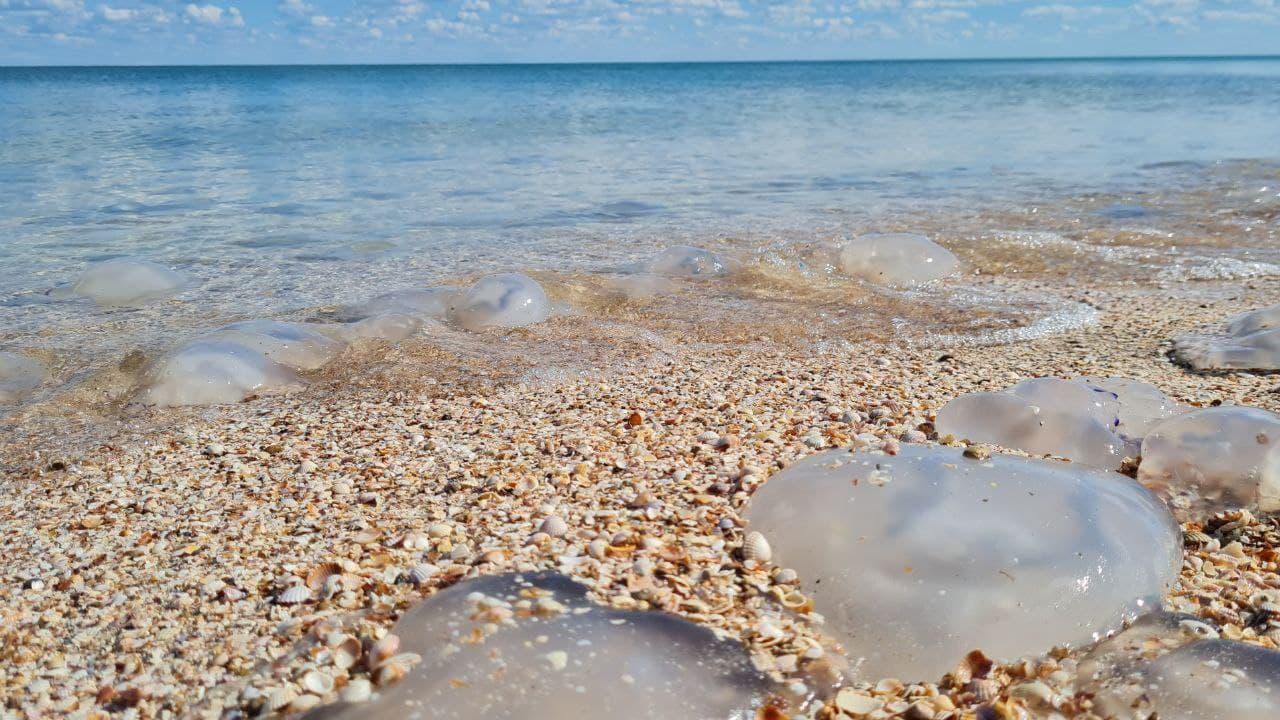 Медузи продовжують атакувати пляжі Кирилівки – фото і відео