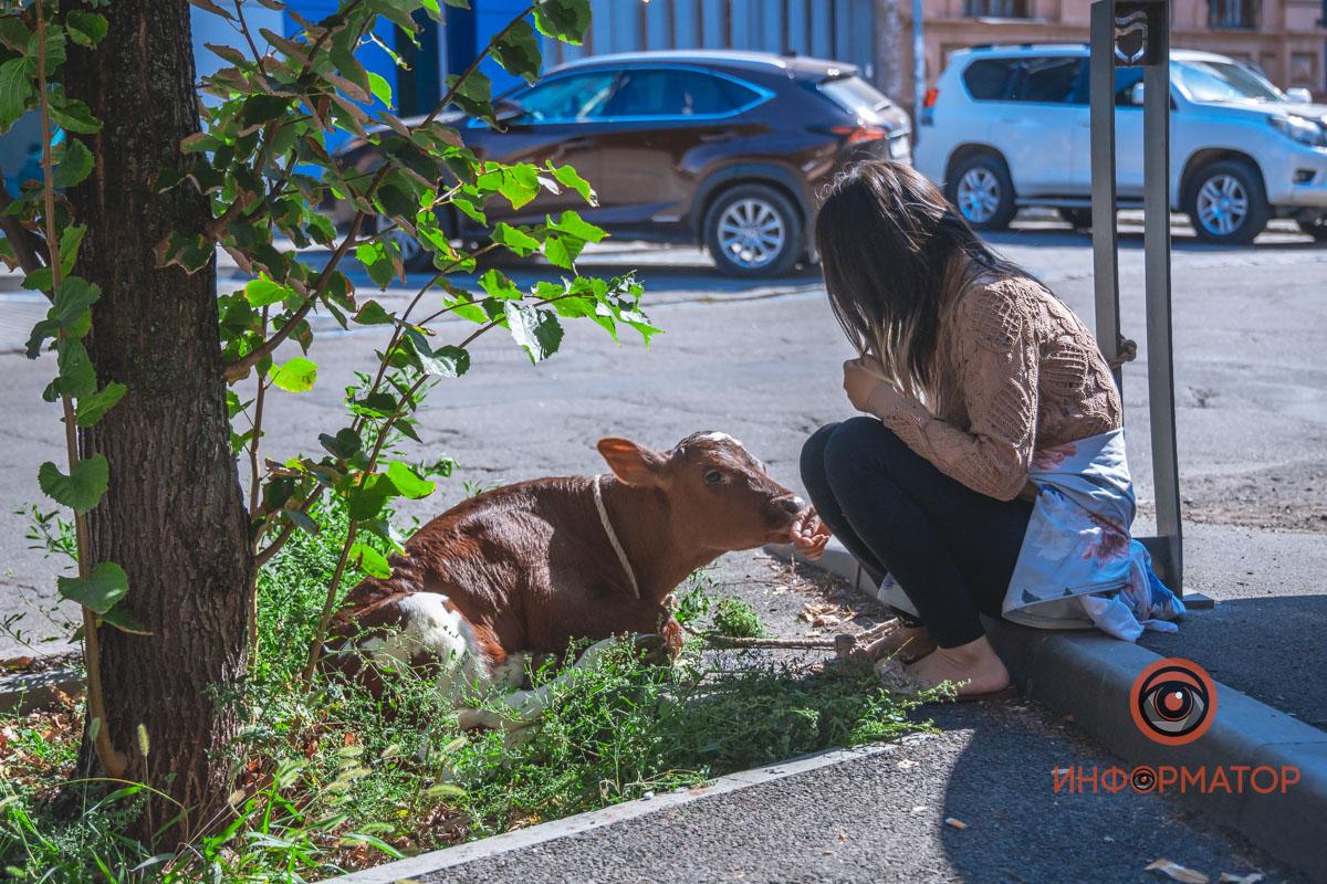 У Дніпрі іноземка поселила у квартирі теля і порося, щоб їх не з'їли – ФОТО