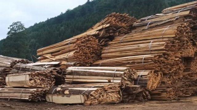 Понад 3 млн грн збитків: ДБР викрило незаконну вирубку лісів на Буковині